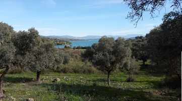 LAND FOR SALE IN MUĞLA BODRUM