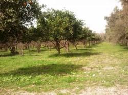 Antalya Konyaaltı BAHTILI Köyünde 18 DÖNÜM KİRALIK ARSA