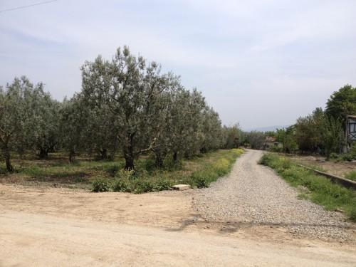Iznik sahilde ارض للبيع مساحة 6 دونم على ساحل بحيرة ازنيك - بورصا