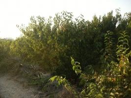 ORDU ÜNYEDE DE TİC+KONUT İMARLI DENİZ MANZARALI 225 M2 ARSA